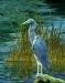 Blue Herron