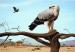 Samburu Spledour
