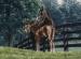 Hickstead Foal