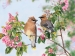 Waxwing Paradise